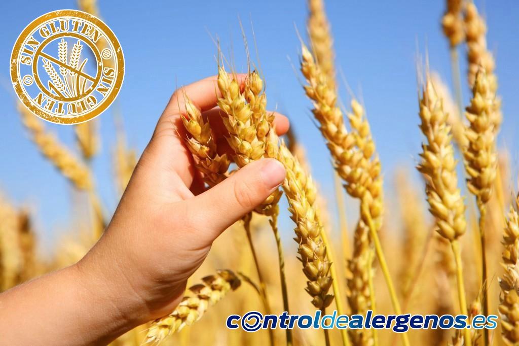 Diferencias entre Enfermedad celíaca, sensibilidad al gluten no celíaca y alergia al trigo